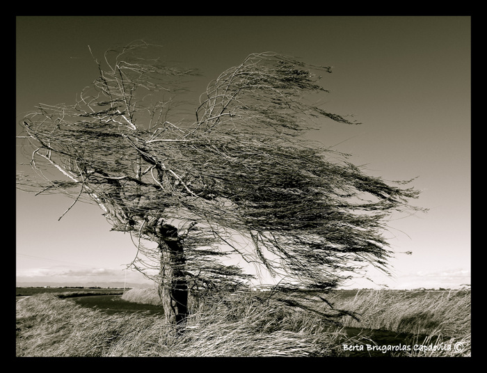 A windy day...