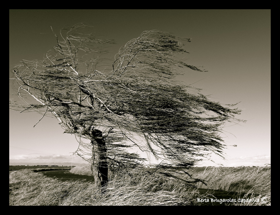 photoblog image A windy day...